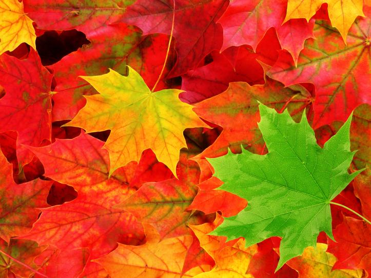 Best-Fall-Leaves-Macro-Wallpaper-HD.png
